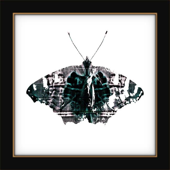 Papillons [Entomologie chromatique] (Création et conception graphique de Didier Desmet) [Artiste Infirme Moteur Cérébral] [Infirmité Motrice Cérébrale] [IMC] [Paralysie Cérébrale] [Cerebral Palsy] [Handicap]