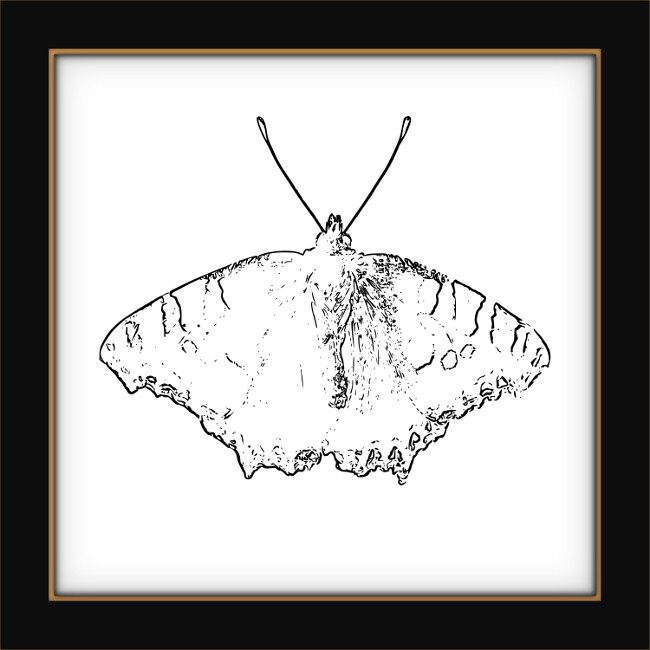[Entomologie chromatique] Papillon #11 [2017] (Création et conception graphique de Didier Desmet)