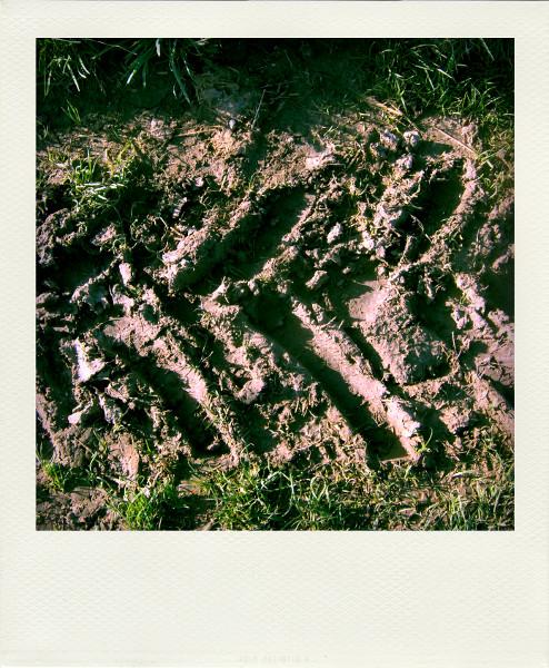Ault - Les champs des falaises - Empreinte (Somme - 80460) [2005] (Photo de Didier Desmet) Pola [Artiste Infirme Moteur Cérébral] [Infirmité Motrice Cérébrale] [IMC] [Paralysie Cérébrale] [Cerebral Palsy] [Handicap]
