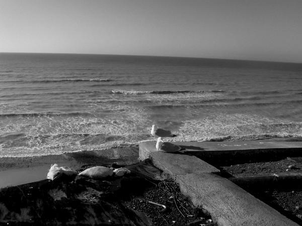 Ault - Quand la nature côtoie les ordures (Somme - 80460) [2005] (Photo de Didier Desmet) [Artiste Infirme Moteur Cérébral] [Infirmité Motrice Cérébrale] [IMC] [Paralysie Cérébrale] [Cerebral Palsy] [Handicap]