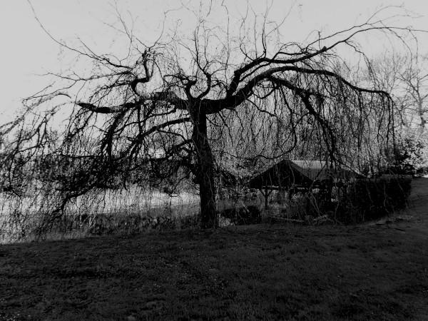 Brissy Hamégicourt - Le lavoir (Picardie - 02240) [2019] (Photo de Didier Desmet) [Artiste Infirme Moteur Cérébral] [Infirmité Motrice Cérébrale] [IMC] [Paralysie Cérébrale] [Cerebral Palsy] [Handicap]