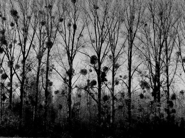 Brissy Hamégicourt - Partition nature (Aisne - 02240) [2019] (Photo de Didier Desmet) Noir et blanc [Artiste Infirme Moteur Cérébral] [Infirmité Motrice Cérébrale] [IMC] [Paralysie Cérébrale] [Cerebral Palsy] [Handicap]