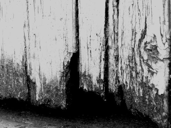 Brissy Hamégicourt - Passage (Aisne - 02240) [2019] (Photo de Didier Desmet) Noir et blanc [Artiste Infirme Moteur Cérébral] [Infirmité Motrice Cérébrale] [IMC] [Paralysie Cérébrale] [Cerebral Palsy] [Handicap]