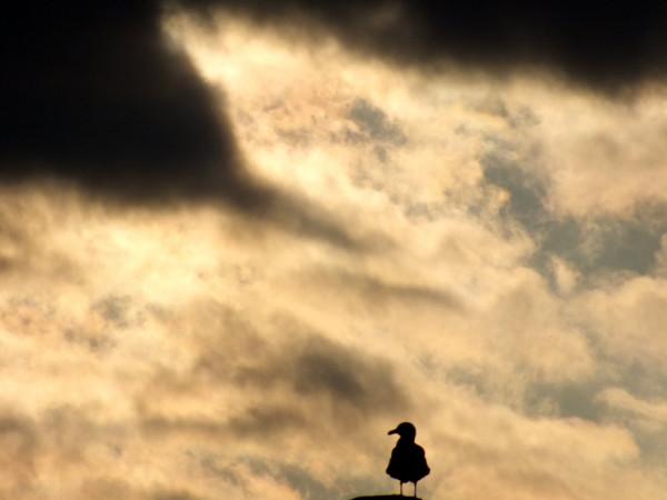 Cayeux-sur-mer - Goéland argenté (Somme - 80410) [2012] (Photo de Didier Desmet) Juin Cheminée Coucher de soleil Nuages [Artiste Infirme Moteur Cérébral] [Infirmité Motrice Cérébrale] [IMC] [Paralysie Cérébrale] [Cerebral Palsy] [Handicap]