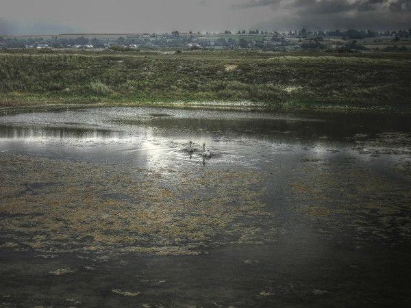 Cayeux-sur-mer - Hable d`Ault - Les cygnes (Somme - 80410) [2011] (Photo de Didier Desmet) HDR [Artiste Infirme Moteur Cérébral] [Infirmité Motrice Cérébrale] [IMC] [Paralysie Cérébrale] [Cerebral Palsy] [Handicap]