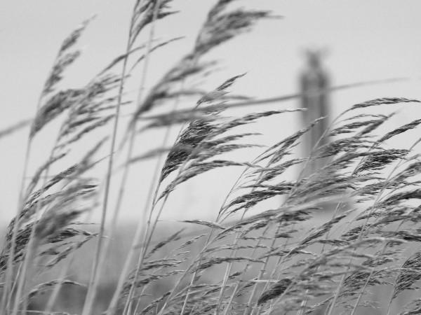 Cayeux-sur-mer - Hable d`Ault - Vue sur le sémaphore (L`Amer Sud) (Somme - 80410) [2014] (Photo de Didier Desmet) Mars 1 [Artiste Infirme Moteur Cérébral] [Infirmité Motrice Cérébrale] [IMC] [Paralysie Cérébrale] [Cerebral Palsy] [Handicap]