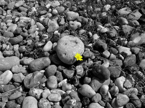 Cayeux-sur-mer - La fleur (Somme - 80410) [2011] (Photo de Didier Desmet) [Artiste Infirme Moteur Cérébral] [Infirmité Motrice Cérébrale] [IMC] [Paralysie Cérébrale] [Cerebral Palsy] [Handicap]