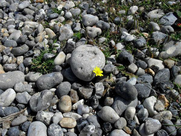 Cayeux-sur-mer - La fleur (Somme - 80410) [2011] (Photo de Didier Desmet) Juillet [Artiste Infirme Moteur Cérébral] [Infirmité Motrice Cérébrale] [IMC] [Paralysie Cérébrale] [Cerebral Palsy] [Handicap]