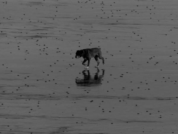 Cayeux-sur-mer - La réflexion du Boxer (Somme - 80410) [2018] (Photo de Didier Desmet) [Artiste Infirme Moteur Cérébral] [Infirmité Motrice Cérébrale] [IMC] [Paralysie Cérébrale] [Cerebral Palsy] [Handicap]
