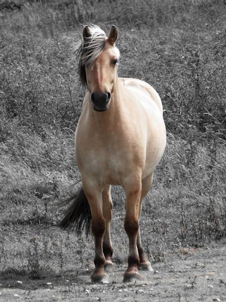 Cayeux-sur-mer - Le Henson - ou cheval de la baie de Somme - Hable d`Ault (Somme - 80410) [2016] (Photo de Didier Desmet) [Artiste Infirme Moteur Cérébral] [Infirmité Motrice Cérébrale] [IMC] [Paralysie Cérébrale] [Cerebral Palsy] [Handicap]