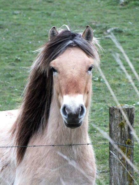 Cayeux-sur-mer - Le Henson, ou cheval de la baie de Somme (Hable d`Ault) (Somme - 80410) [2014] (Photo de Didier Desmet) Mars [Artiste Infirme Moteur Cérébral] [Infirmité Motrice Cérébrale] [IMC] [Paralysie Cérébrale] [Cerebral Palsy] [Handicap]