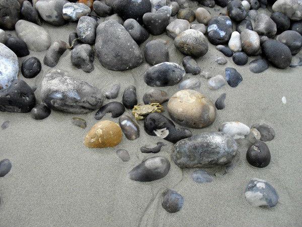 Cayeux-sur-mer - Le crabe (Somme - 80410) [2011] (Photo de Didier Desmet) Juillet [Artiste Infirme Moteur Cérébral] [Infirmité Motrice Cérébrale] [IMC] [Paralysie Cérébrale] [Cerebral Palsy] [Handicap]