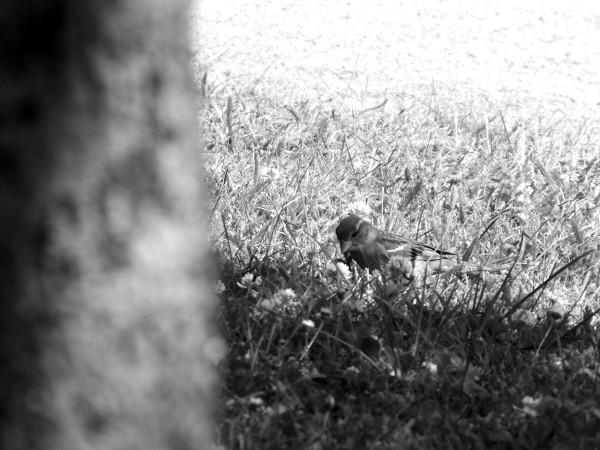 Cayeux-sur-mer - Le moineau (Somme - 80410) [2014] (Photo de Didier Desmet) [Artiste Infirme Moteur Cérébral] [Infirmité Motrice Cérébrale] [IMC] [Paralysie Cérébrale] [Cerebral Palsy] [Handicap]