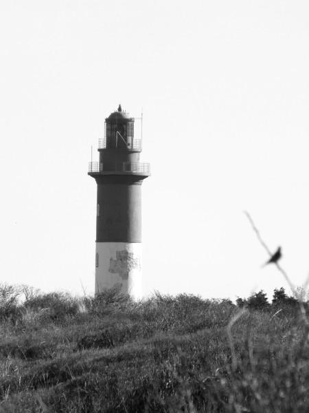 Cayeux-sur-mer - Le phare et l`oiseau (Brighton) (Somme - 80410) [2014] (Photo de Didier Desmet) Mars [Artiste Infirme Moteur Cérébral] [Infirmité Motrice Cérébrale] [IMC] [Paralysie Cérébrale] [Cerebral Palsy] [Handicap]
