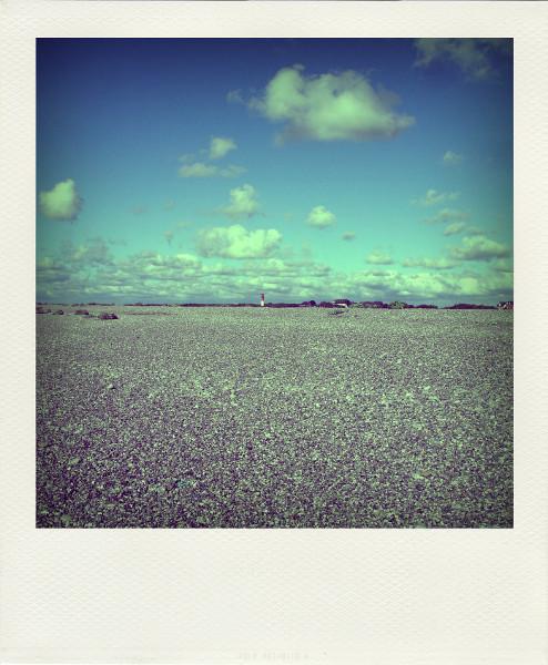 Cayeux-sur-mer - Le phare, vue de la plage de Brighton (Somme - 80410) [2011] (Photo de Didier Desmet) Aot 2 Pola [Artiste Infirme Moteur Cérébral] [Infirmité Motrice Cérébrale] [IMC] [Paralysie Cérébrale] [Cerebral Palsy] [Handicap]