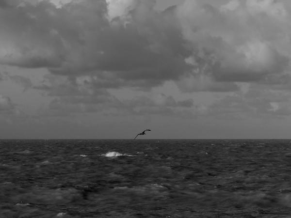 Cayeux-sur-mer - Pêche (Somme - 80410) [2018] (Photo de Didier Desmet) [Artiste Infirme Moteur Cérébral] [Infirmité Motrice Cérébrale] [IMC] [Paralysie Cérébrale] [Cerebral Palsy] [Handicap]