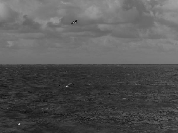 Cayeux-sur-mer - Pêche à deux (Somme - 80410) [2018] (Photo de Didier Desmet) [Artiste Infirme Moteur Cérébral] [Infirmité Motrice Cérébrale] [IMC] [Paralysie Cérébrale] [Cerebral Palsy] [Handicap]