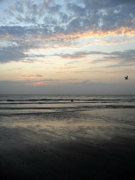 Cayeux-sur-mer (Somme - 80410) [2011] (Photo de Didier Desmet) Coucher de soleil Août 1 [Artiste Infirme Moteur Cérébral] [Infirmité Motrice Cérébrale] [IMC] [Paralysie Cérébrale] [Cerebral Palsy] [Handicap]