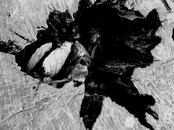 Eu - Souche d`arbre près du Château d`Eu (Seine-Maritime - 76260) [2016] (Photo de Didier Desmet) Noir et blanc [Artiste Infirme Moteur Cérébral] [Infirmité Motrice Cérébrale] [IMC] [Paralysie Cérébrale] [Cerebral Palsy] [Handicap]