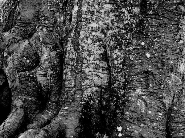 Eu - Tronc - Le Guisard près du Château d`Eu (Seine-Maritime - 76260) [2016] (Photo de Didier Desmet) Noir et blanc [Artiste Infirme Moteur Cérébral] [Infirmité Motrice Cérébrale] [IMC] [Paralysie Cérébrale] [Cerebral Palsy] [Handicap]