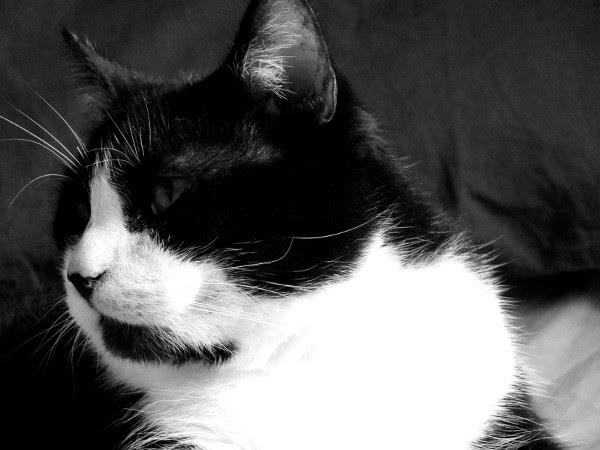 Félix, le chat [2016] (Photo de Didier Desmet) #2 [Artiste Infirme Moteur Cérébral] [Infirmité Motrice Cérébrale] [IMC] [Paralysie Cérébrale] [Cerebral Palsy] [Handicap]