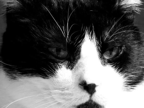 Félix, le chat [2016] (Photo de Didier Desmet) #4 [Artiste Infirme Moteur Cérébral] [Infirmité Motrice Cérébrale] [IMC] [Paralysie Cérébrale] [Cerebral Palsy] [Handicap]