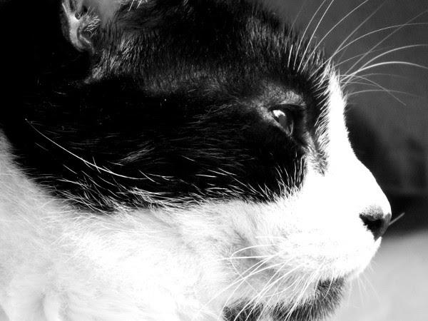 Félix, le chat [2016] (Photo de Didier Desmet) #5 [Artiste Infirme Moteur Cérébral] [Infirmité Motrice Cérébrale] [IMC] [Paralysie Cérébrale] [Cerebral Palsy] [Handicap]
