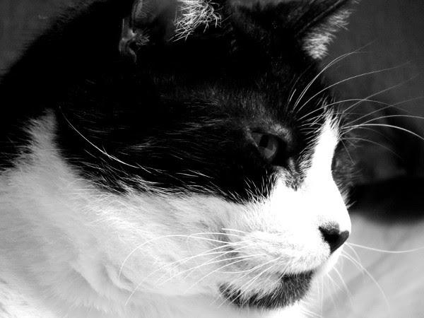 Félix, le chat [2016] (Photo de Didier Desmet) #6 [Artiste Infirme Moteur Cérébral] [Infirmité Motrice Cérébrale] [IMC] [Paralysie Cérébrale] [Cerebral Palsy] [Handicap]