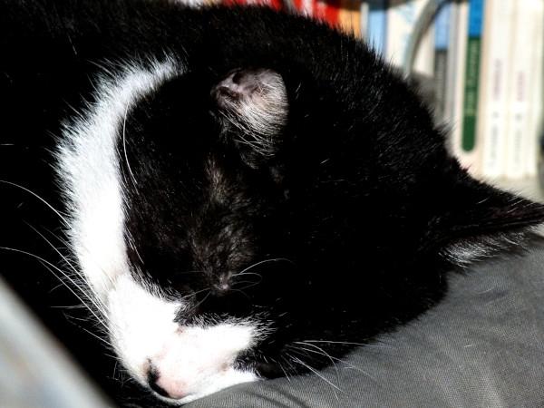 Félix, le chat [2017] (Photo de Didier Desmet) [Artiste Infirme Moteur Cérébral] [Infirmité Motrice Cérébrale] [IMC] [Paralysie Cérébrale] [Cerebral Palsy] [Handicap]