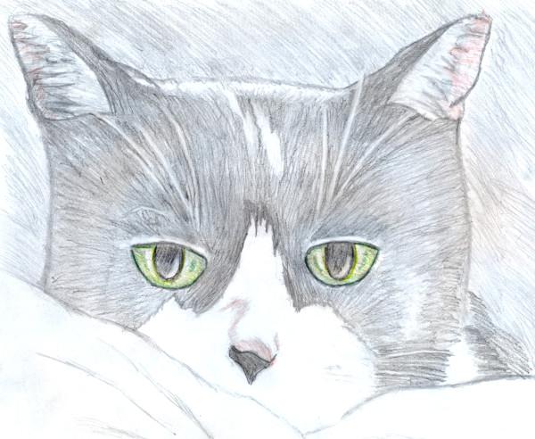 Félix, le chat [Février 2020] (Dessin de Didier Desmet) [Artiste Infirme Moteur Cérébral] [Infirmité Motrice Cérébrale] [IMC] [Paralysie Cérébrale] [Cerebral Palsy] [Handicap]