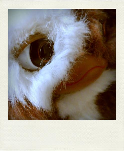 Gizmo, le mogwai [2012] (Photo de Didier Desmet) Gremlins Pola [Artiste Infirme Moteur Cérébral] [Infirmité Motrice Cérébrale] [IMC] [Paralysie Cérébrale] [Cerebral Palsy] [Handicap]