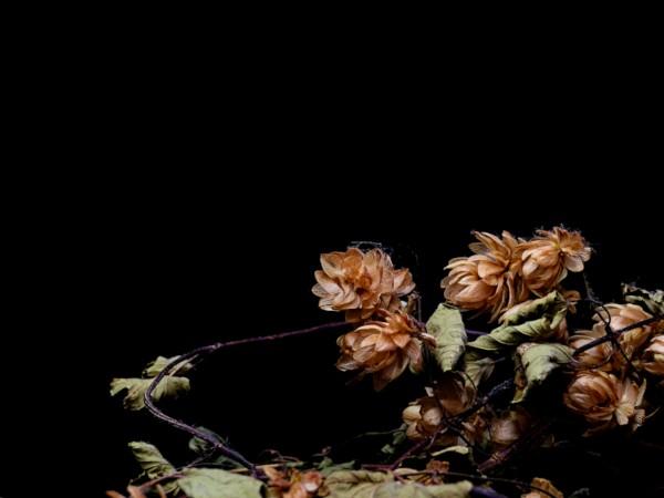 Houblon #4 [2020] (Photo de Didier Desmet) [Artiste Infirme Moteur Cérébral] [Infirmité Motrice Cérébrale] [IMC] [Paralysie Cérébrale] [Cerebral Palsy] [Handicap] [Kawaii]