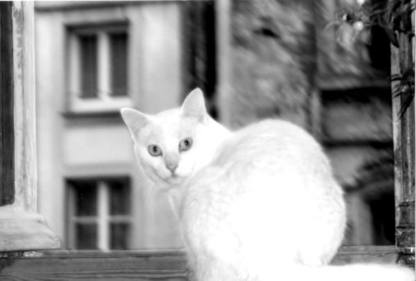 La chatte blanche (Luna) [2001] (Photo de Didier Desmet) Argentique [Artiste Infirme Moteur Cérébral] [Infirmité Motrice Cérébrale] [IMC] [Paralysie Cérébrale] [Cerebral Palsy] [Handicap]