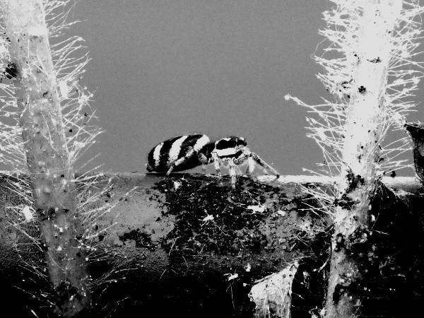 L`araignée [2017] (Photo de Didier Desmet) [Artiste Infirme Moteur Cérébral] [Infirmité Motrice Cérébrale] [IMC] [Paralysie Cérébrale] [Cerebral Palsy] [Handicap]
