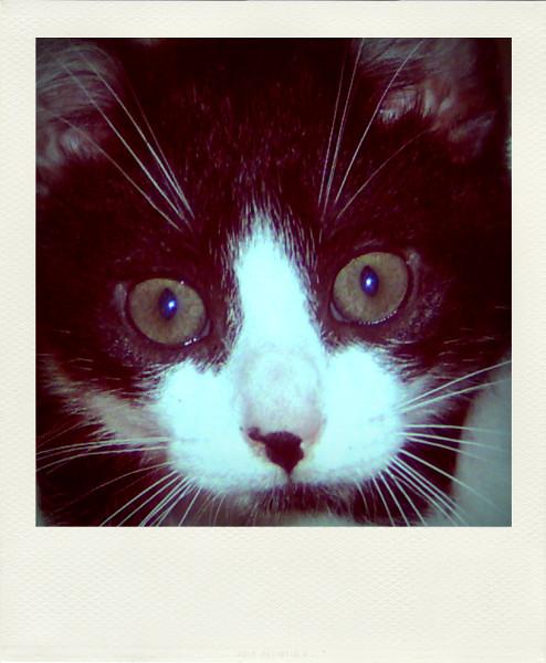 Le chat (Félix) [2005] (Photo de Didier Desmet) Pola [Artiste Infirme Moteur Cérébral] [Infirmité Motrice Cérébrale] [IMC] [Paralysie Cérébrale] [Cerebral Palsy] [Handicap]