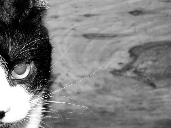Le chat (Félix) [2012] (Photo de Didier Desmet) (2) [Artiste Infirme Moteur Cérébral] [Infirmité Motrice Cérébrale] [IMC] [Paralysie Cérébrale] [Cerebral Palsy] [Handicap]