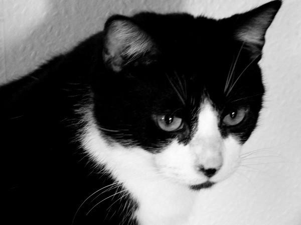 Le chat (Félix) [2012] (Photo de Didier Desmet) (3) [Artiste Infirme Moteur Cérébral] [Infirmité Motrice Cérébrale] [IMC] [Paralysie Cérébrale] [Cerebral Palsy] [Handicap]