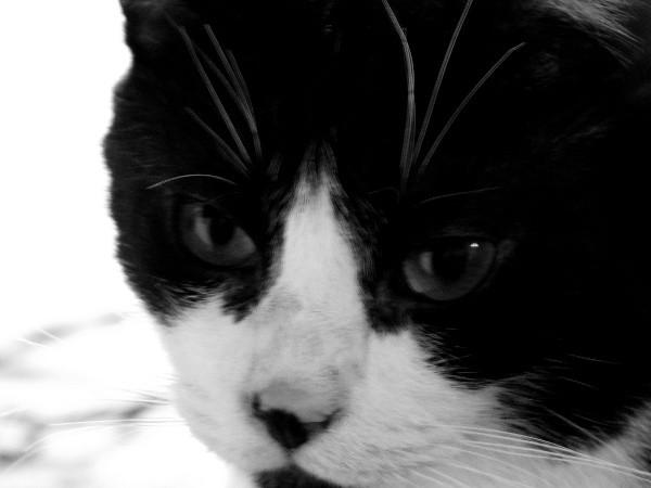 Le chat (Félix) [2012] (Photo de Didier Desmet) (4) [Artiste Infirme Moteur Cérébral] [Infirmité Motrice Cérébrale] [IMC] [Paralysie Cérébrale] [Cerebral Palsy] [Handicap]