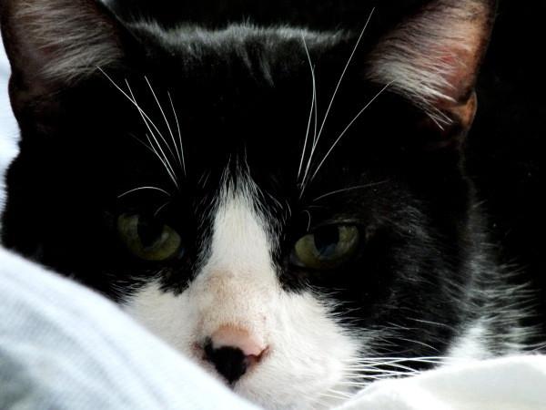Le chat (Félix) [2012] (Photo de Didier Desmet) (5) [Artiste Infirme Moteur Cérébral] [Infirmité Motrice Cérébrale] [IMC] [Paralysie Cérébrale] [Cerebral Palsy] [Handicap]