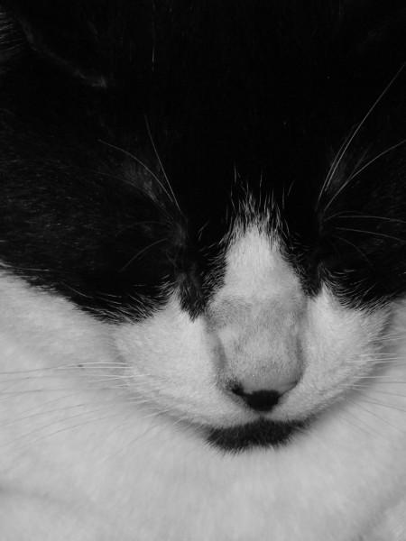 Le chat (Félix) [2012] (Photo de Didier Desmet) (6) Noir et blanc monochrome [Artiste Infirme Moteur Cérébral] [Infirmité Motrice Cérébrale] [IMC] [Paralysie Cérébrale] [Cerebral Palsy] [Handicap]