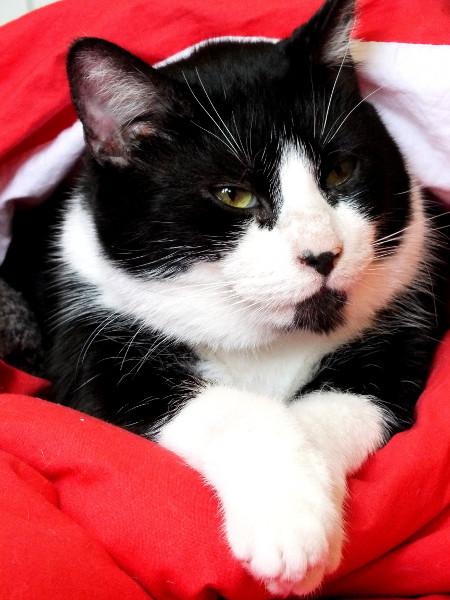 Le chat (Félix) [2012] (Photo de Didier Desmet) [Artiste Infirme Moteur Cérébral] [Infirmité Motrice Cérébrale] [IMC] [Paralysie Cérébrale] [Cerebral Palsy] [Handicap]