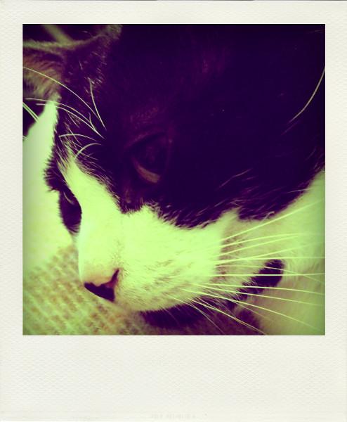Le chat (Félix) [2012] (Photo de Didier Desmet) Pola [Artiste Infirme Moteur Cérébral] [Infirmité Motrice Cérébrale] [IMC] [Paralysie Cérébrale] [Cerebral Palsy] [Handicap]