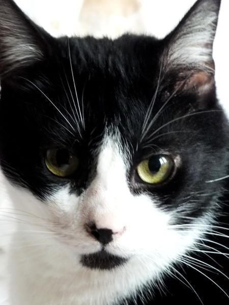 Le chat (Félix) [2014] (Photo de Didier Desmet) (1) [Artiste Infirme Moteur Cérébral] [Infirmité Motrice Cérébrale] [IMC] [Paralysie Cérébrale] [Cerebral Palsy] [Handicap]