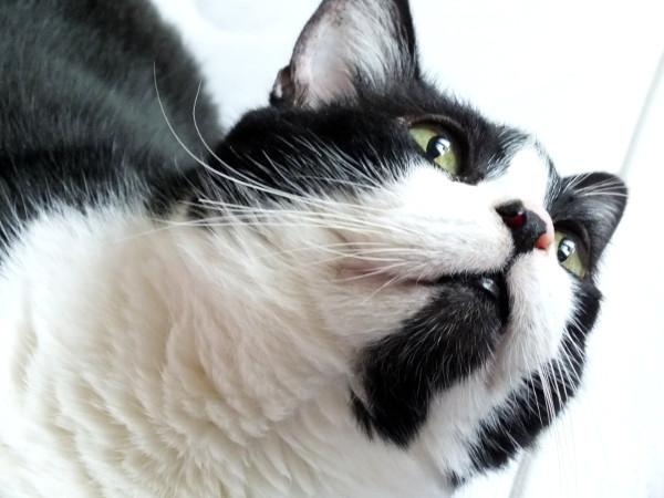 Le chat (Félix) [2014] (Photo de Didier Desmet) (2) [Artiste Infirme Moteur Cérébral] [Infirmité Motrice Cérébrale] [IMC] [Paralysie Cérébrale] [Cerebral Palsy] [Handicap]