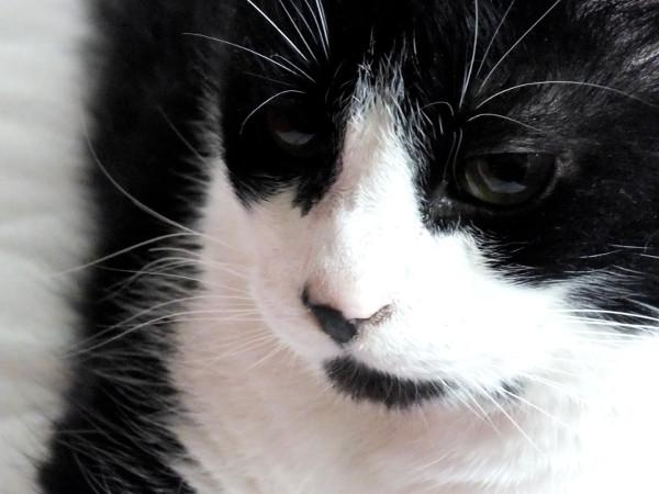 Le chat (Félix) [2014] (Photo de Didier Desmet) (3) [Artiste Infirme Moteur Cérébral] [Infirmité Motrice Cérébrale] [IMC] [Paralysie Cérébrale] [Cerebral Palsy] [Handicap]