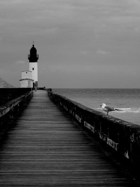 Le phare du Tréport et le goéland juvénile (Seine-Maritime - 76470) [2016] (Photo de Didier Desmet) 2 Monochrome [Artiste Infirme Moteur Cérébral] [Infirmité Motrice Cérébrale] [IMC] [Paralysie Cérébrale] [Cerebral Palsy] [Handicap]