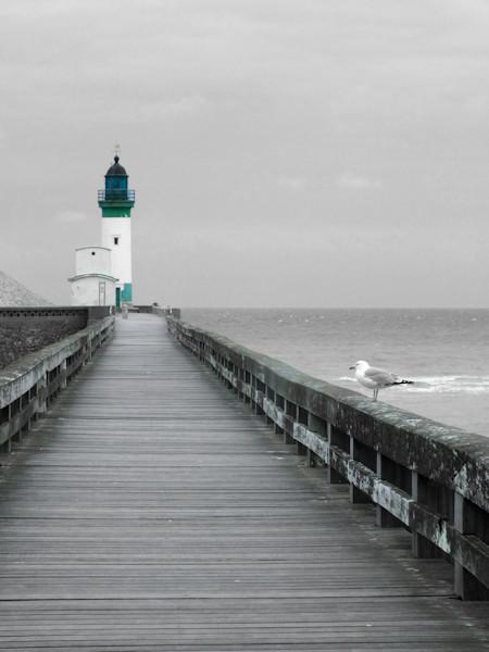 Le phare du Tréport et le goéland juvénile (Seine-Maritime - 76470) [2016] (Photo de Didier Desmet) [Artiste Infirme Moteur Cérébral] [Infirmité Motrice Cérébrale] [IMC] [Paralysie Cérébrale] [Cerebral Palsy] [Handicap]