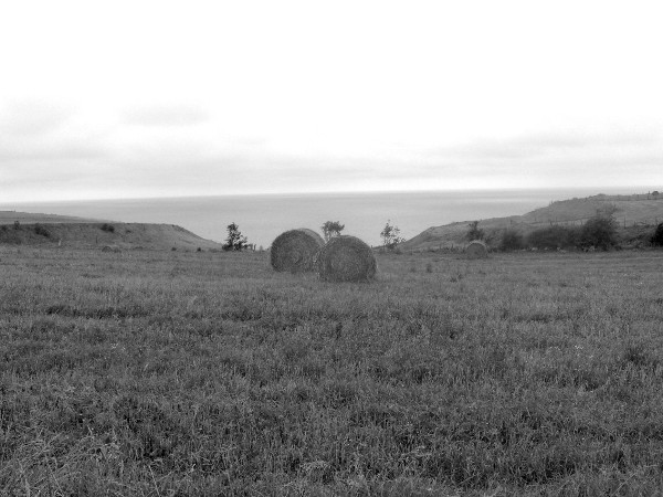 Les champs des falaises d`Ault (Somme - 80460) [2005] (Photo de Didier Desmet) Ballots de paille Noir et blanc [Artiste Infirme Moteur Cérébral] [Infirmité Motrice Cérébrale] [IMC] [Paralysie Cérébrale] [Cerebral Palsy] [Handicap]
