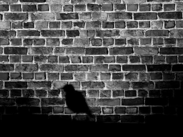 Lille - L`étourneau [2012] (Photo de Didier Desmet) Noir et blanc [Artiste Infirme Moteur Cérébral] [Infirmité Motrice Cérébrale] [IMC] [Paralysie Cérébrale] [Cerebral Palsy] [Handicap]