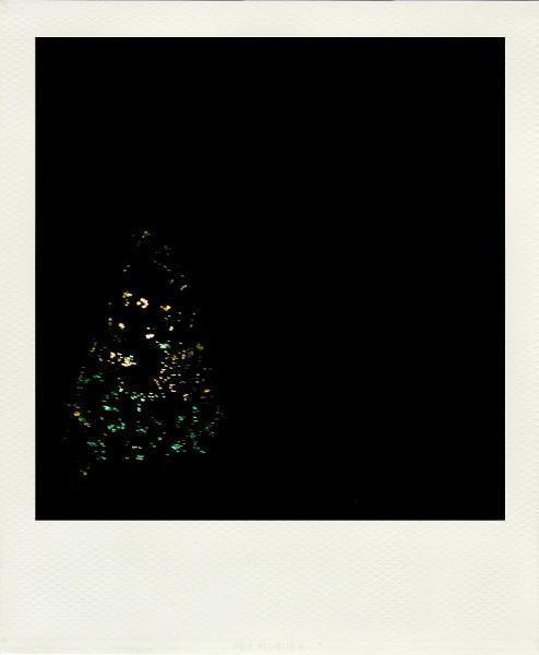 Lumières de Noël [2010] (Photo de Didier Desmet) Sapin lumineux Pola [Artiste Infirme Moteur Cérébral] [Infirmité Motrice Cérébrale] [IMC] [Paralysie Cérébrale] [Cerebral Palsy] [Handicap]
